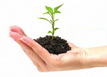 <img alt=&quot;Small Business LMS plant growing hand&quot;src=&quot;https://topyx.com/wp-content/uploads/2015/08/Small-Business-LMS.jpg&quot;/>